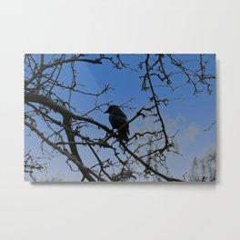 Western Jackdaw In A Tree   Metal Print