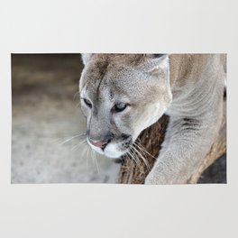 Cougar on a tree branch Rug