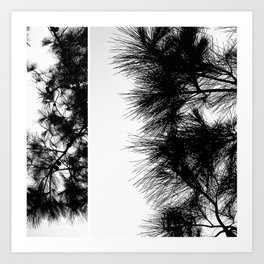 Mediterranean black and white pine tree Art Print