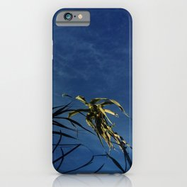 Nature and greenery 14 with reed iPhone Case