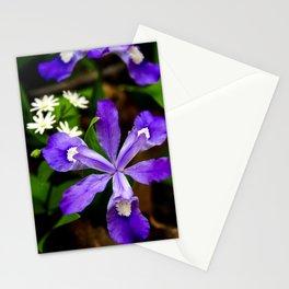 Dwarf Iris Botanical Art, Fine Art Print, Purple Flower Stationery Cards