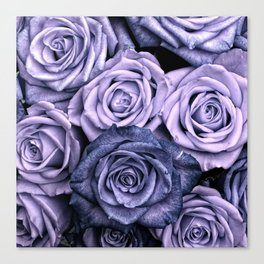 PURPLE ROSES floral flowers violet Canvas Print