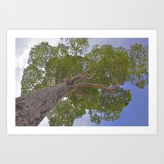 Under the giving tree Art Print