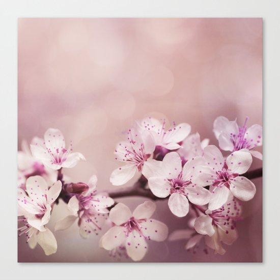soft pink cherry blossom Canvas Print