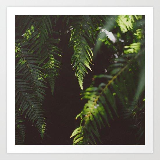Ferns of Emerald Art Print