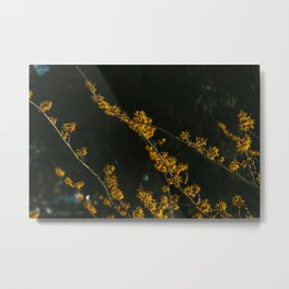 Oker yellow flowers ''blossom'' | nature and travel photography | fine art print Metal Print