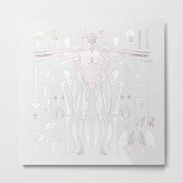 Anatomy Natural 38.1 Sketch Metal Print