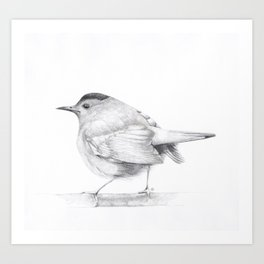 Songbird Stay Awhile Art Print