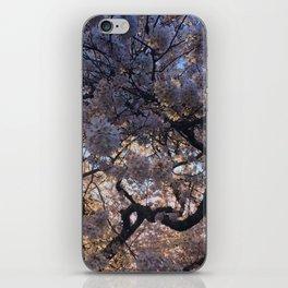 Cherry Tree iPhone Skin