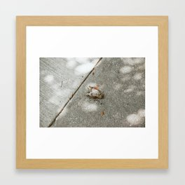 film no. 1 Framed Art Print