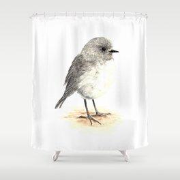 Toutouwai / South Island Robin - a native New Zealand bird 2013 Shower Curtain