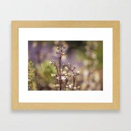 Fairy bloom Framed Art Print