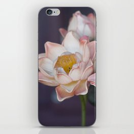 Lovely Water Lily II iPhone Skin
