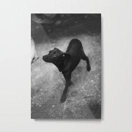 sniff Metal Print
