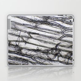 Wing of a Fly Laptop & iPad Skin
