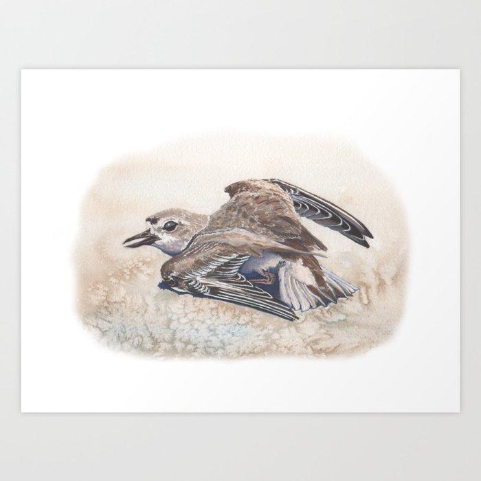 Snowy Plover broken wing distraction display Art Print