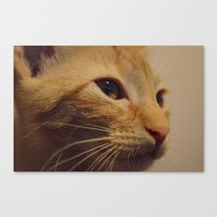 taco Canvas Prints featuring Taco by Admire Beauty