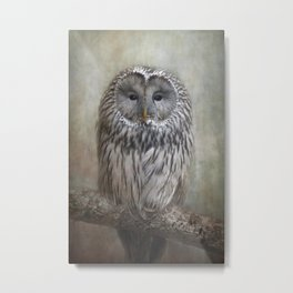 Ural Owl ( Grey owl ) Metal Print