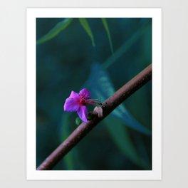 Purple tree flower Art Print