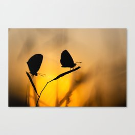 Silhouette of moths Canvas Print