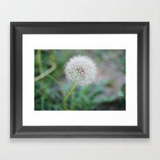 Lone Dandelion Framed Art Print