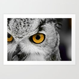 Black and white owl with golden eyes Art Print