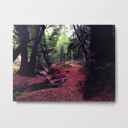 Into the universe through a forest. Metal Print