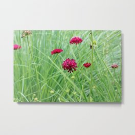 Beautiful Magenta Flower in the Meadow Metal Print