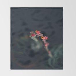 Succulent (3) Throw Blanket