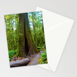 Cathedral Grove on Vancouver Island, BC Stationery Cards