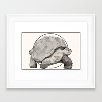 tortoise Framed Art Prints featuring Tortoise by Twentyfive