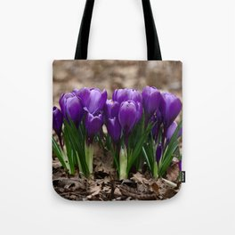 Purple Spring - crocuses herald the start of Spring Tote Bag