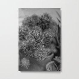Thornes Metal Print
