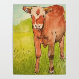 Moo Cow Poster