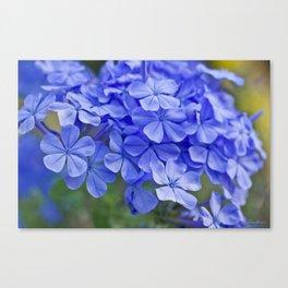 Summer garden blues - macro floral phtography Canvas Print