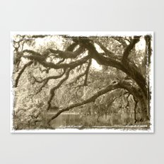WaterOak Canvas Print