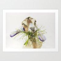 Goat eating grass Watercolor  Art Print