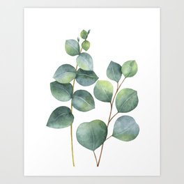 Watercolor eucalyptus branches Art Print