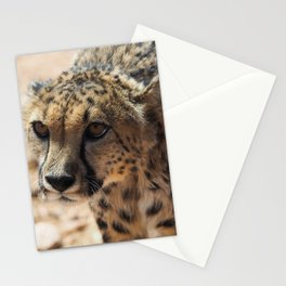 African Cheetah Stationery Cards