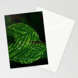 Leaves V2WL Stationery Cards