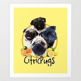 Citricpugs Art Print