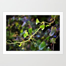 Curlicue Vine with Thorns Art Print