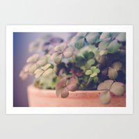 clover Art Prints featuring Clover by Juste Pixx Photography