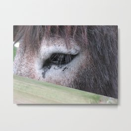Donkey's Eye Metal Print