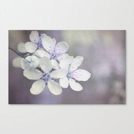 Delicate blossom Canvas Print