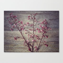 Shabby chic coral bell flowers Canvas Print