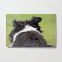 Rudy ~ Border Collie Metal Print