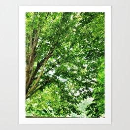 Pretty Trees in Arlington Art Print