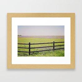 bluebonnet field Framed Art Print