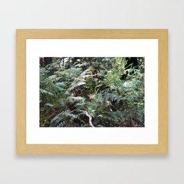 Fern 1 Framed Art Print
